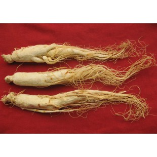 Chinese Chang Bai Shan Ginseng Root Panax,healthy