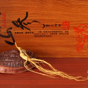 100% Bulk China ChangBaiShan Old mountain ginseng Roots,15 years,linxia ginseng