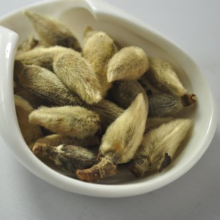 gflos Magnoliae,blond magnolia flower china xinyi Chinese herbal tea.
